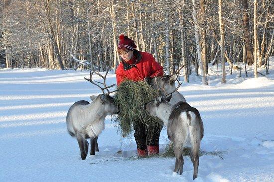 Tuula's Reindeer