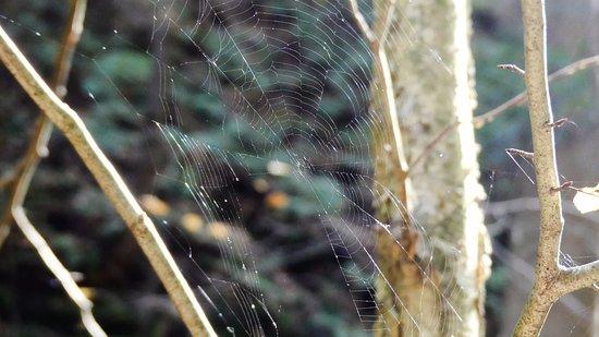 Rockbridge, โอไฮโอ: Spider web.