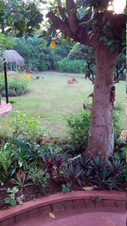 Busoga Trust Guest House: Nice Gardens