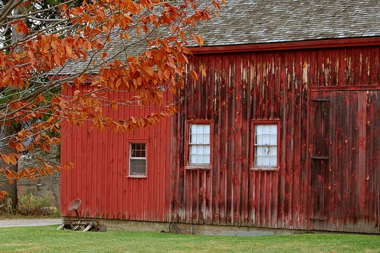 Pittsfield, MA: The barn, with late autumn leaves in the foreground.