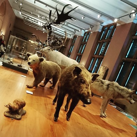 Kelvingrove Art Gallery and Museum: Hall d'expo