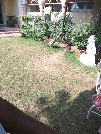Hotel Anuraag Villa: IMG-20161030-WA0023_large.jpg