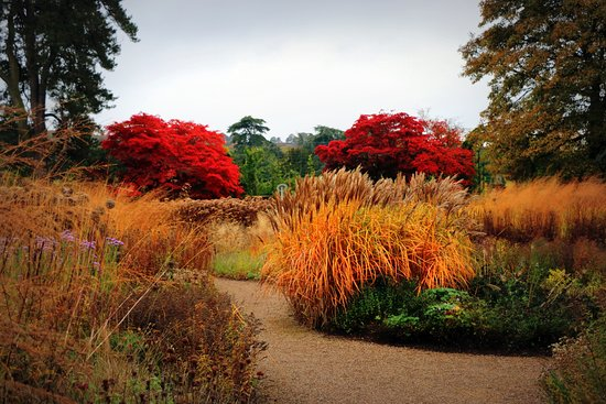 Trentham, UK: autmn colours