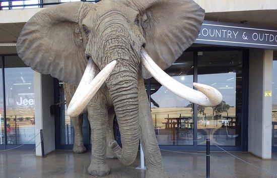Middleburg, Sudáfrica: Beautiful shop.