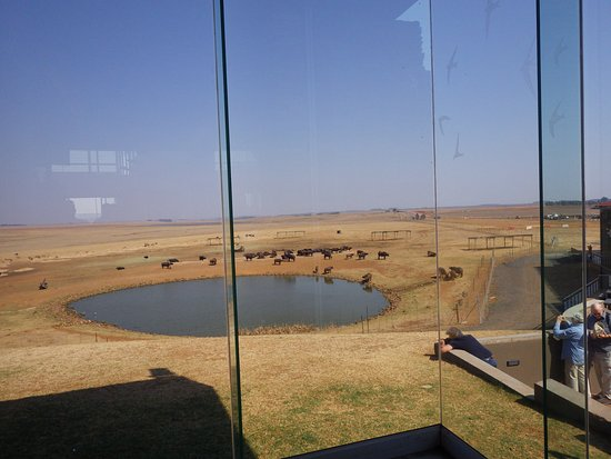 Middleburg, South Africa: View