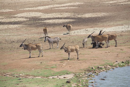 Middleburg, South Africa: zebra and more