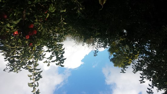 Ballycross Apple Farm: 20161023_125610_large.jpg