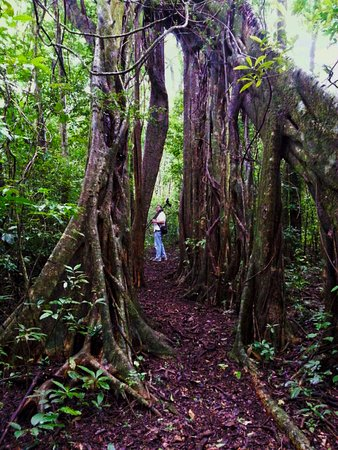 Monteverde Nature Guided Tours