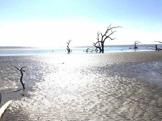 Savannah Coastal Ecotours Ossabaw Island South Boneyard Beach