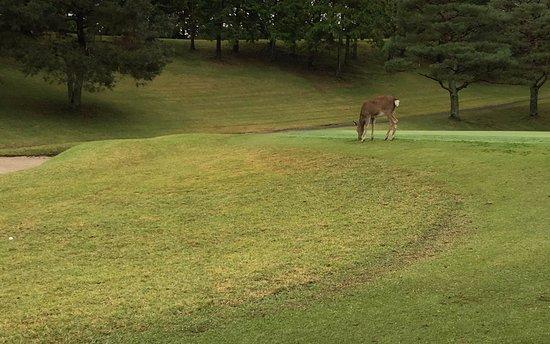 Mishima Golf Club