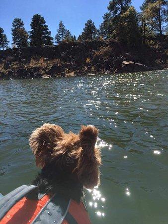 Fool Hollow Lake Recreation Area: FB_IMG_1477863392749_large.jpg