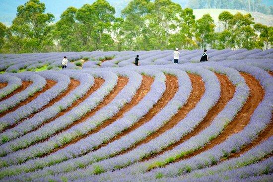 Tasmânia, Austrália: Flowering in Summer