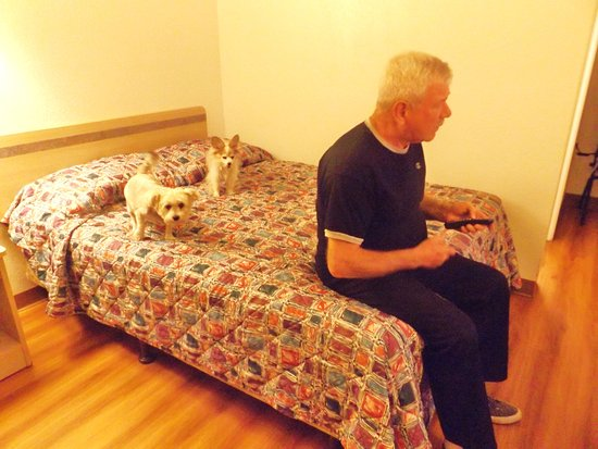 Motel 6 Santa Rosa: Pet friendly but basic cheap furniture
