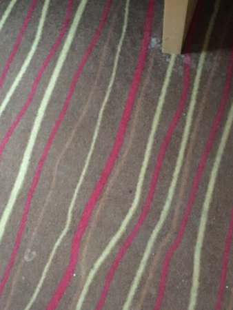 Ibis Al Rigga: Carpet was badly stained, couch was dirty