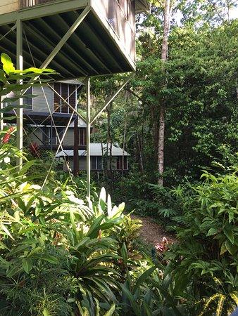 Daintree EcoLodge & Spa: photo2.jpg