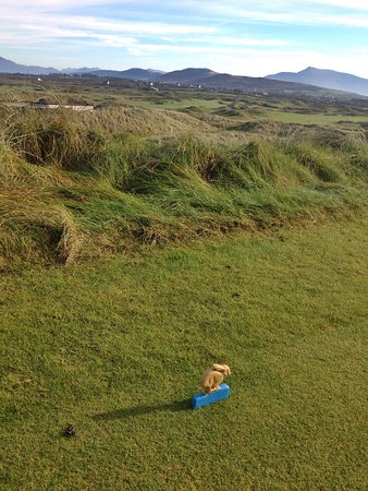 Waterville Golf Links : Love the tee markers!!!