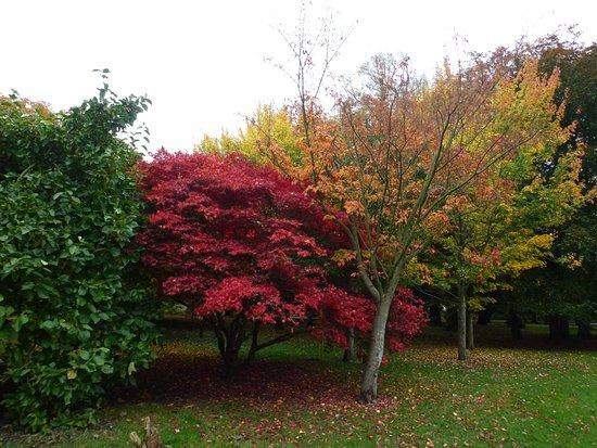 Bute Park: Cores do outono