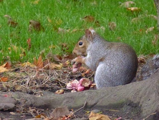 Bute Park: Esquilinho