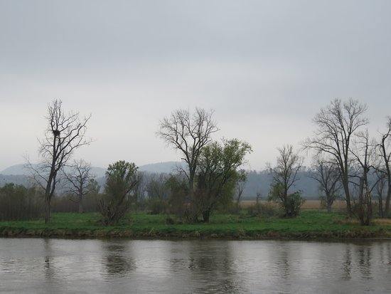 Le Claire, IA: Bald eagle's nest along the river! Saw many eagles!