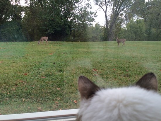 Clarion Inn Harpers Ferry: Kitty watching the deer