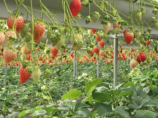 Izu Fruit Park