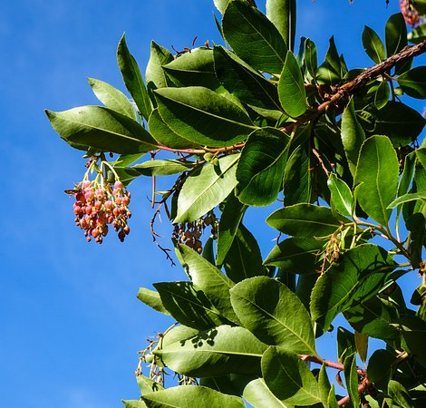 The sign identified this as a 'strawberry tree' although it has me puzzled!