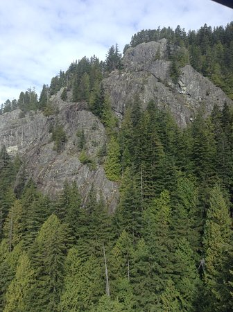 North Vancouver, Canada: Famous Firs, on the gondola way down