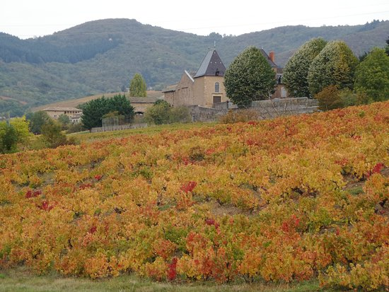 Julienas, Γαλλία: The vineyards in autumn colours.