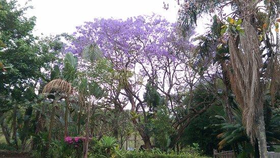 Kiepersol, Sydafrika: lovely garden area