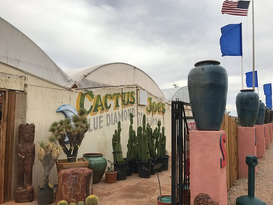 Cactus Joe's Blue Diamond Nursery