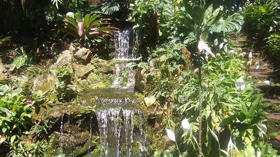 Spirogyra Butterfly Garden: KIMG0064_large.jpg