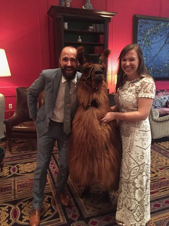 Kimpton Hotel Monaco Portland: We brought a llama into the hotel!