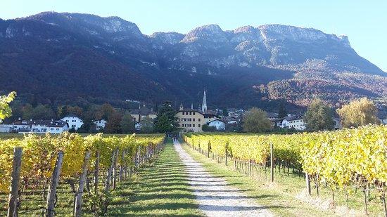 Weingut / Vinothek Castel Sallegg