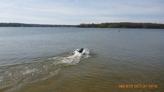 Spotsylvania, VA: swim