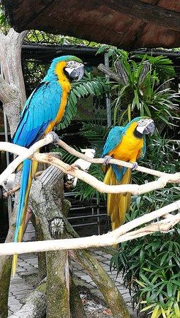 Songkhla Zoo : IMG_20161029_114117_large.jpg