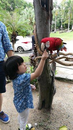 Songkhla Zoo : IMG_20161029_115542_large.jpg