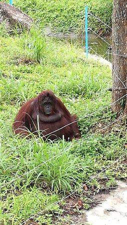 Songkhla Zoo : IMG_20161029_121234_large.jpg
