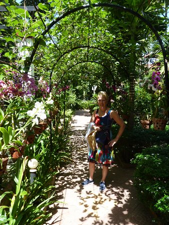 Central Boutique Angkor Hotel: Orchids on display in arbour