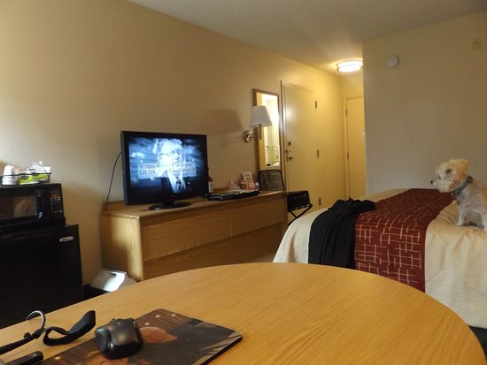 Red Roof Inn Phoenix North - Bell Road: Pet friendly, large room