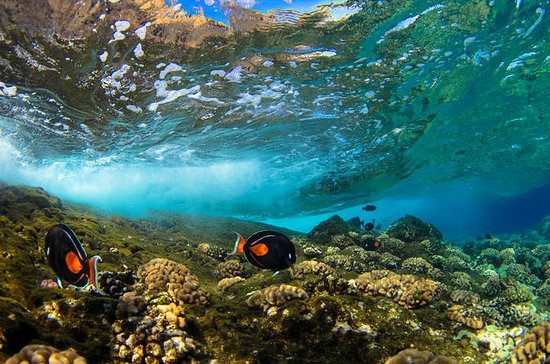 Molokini Wild Side: Snorkel And...