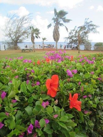Spouting Horn Beach Park - Landscaping
