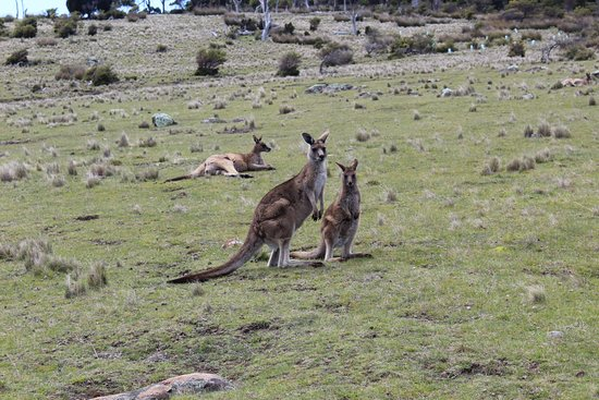 Тасмания, Австралия: Some of the inhabitants