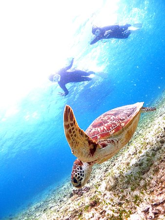 Petit Resort Native Sea Amami: ダイビングショップも同じ経営です