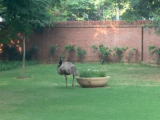 Westin Sohna Resort and Spa: The omnipresent emu