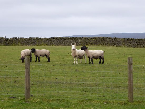 High Keenley Fell Farm: The perfect neighbours!