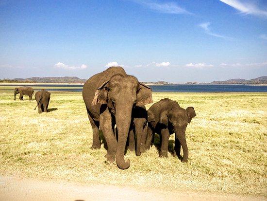 Wattala, Sri Lanka : photo1.jpg