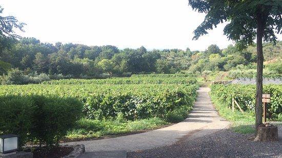 Giardini Naxos, Italy: Sicily Tour service