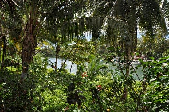 Zdjęcie Loboc River Resort