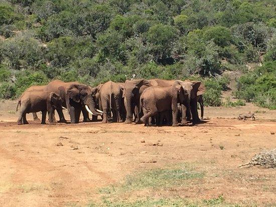 Addo Elephant National Park - Safari Tent