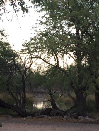 Ghanzi, Botswana: photo3.jpg
